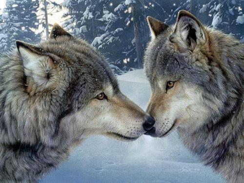 Loups 3
