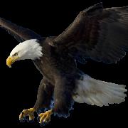 Scouts laval aigle